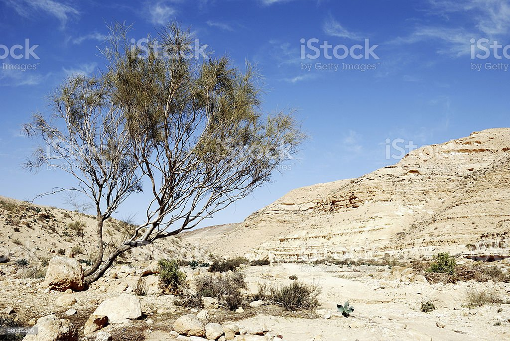 Desert Negev royalty-free stock photo
