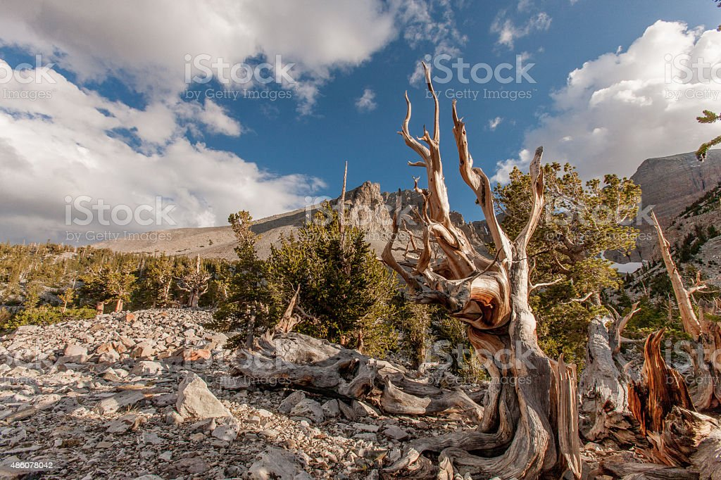 Desert Nevada stock photo