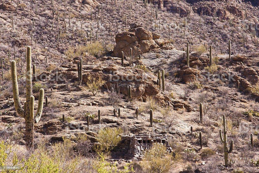 Desert of Arizona royalty-free stock photo
