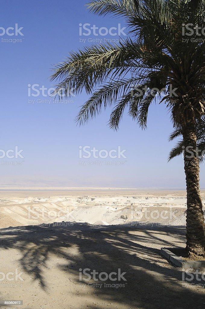 Pustynia, palmy i Morze Martwe zbiór zdjęć royalty-free