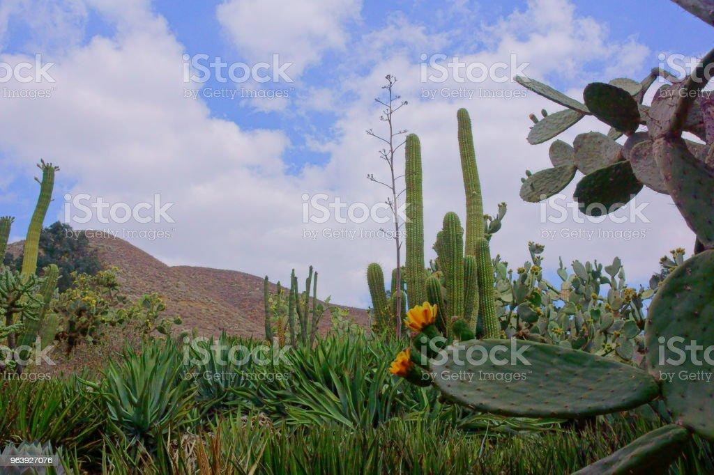 Desert passion. - Royalty-free Desert Stock Photo