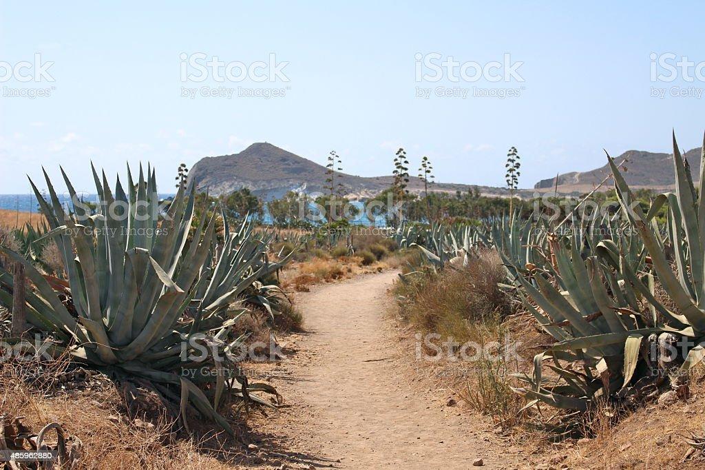Desert path leading to beach stock photo