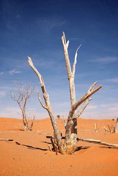 Desert – Foto