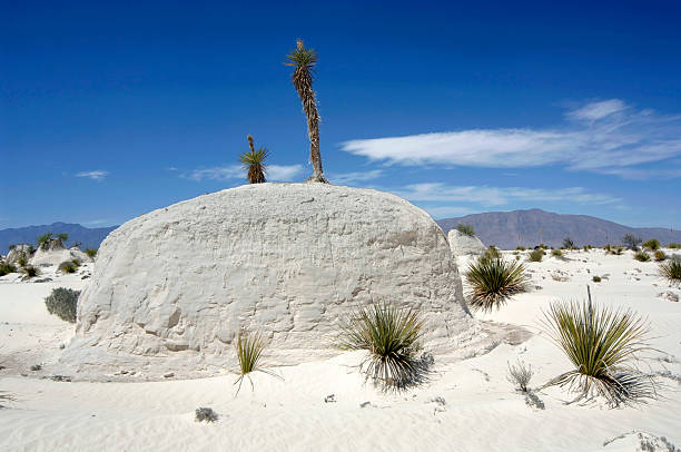"Desert ""A white desert, made entirely from gypsum sand in the nature reserve area Cuatro Cienegas in the north of Mexico."" coahuila state stock pictures, royalty-free photos & images"