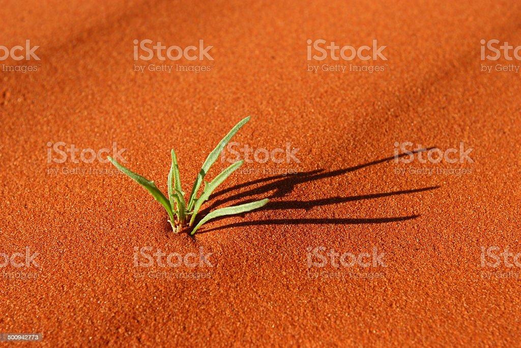 Desert Plant stock photo