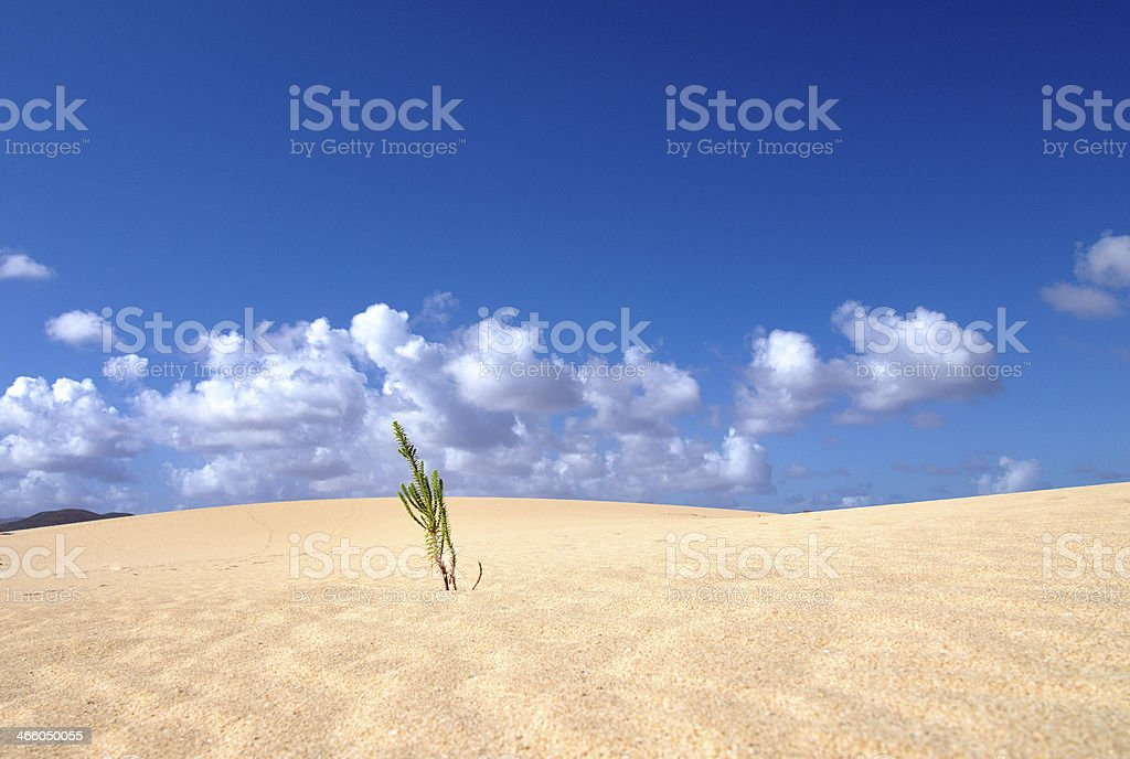 Desert plant surviving and growing stock photo