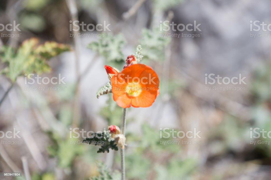 Desert Plants Found In The Mojave Desert Region Of Nevada Stock