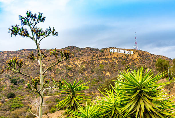 Desert Plants & Hollywood Sign, California stock photo