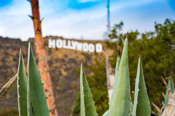 Desert Plants in Hollywood, California stock photo