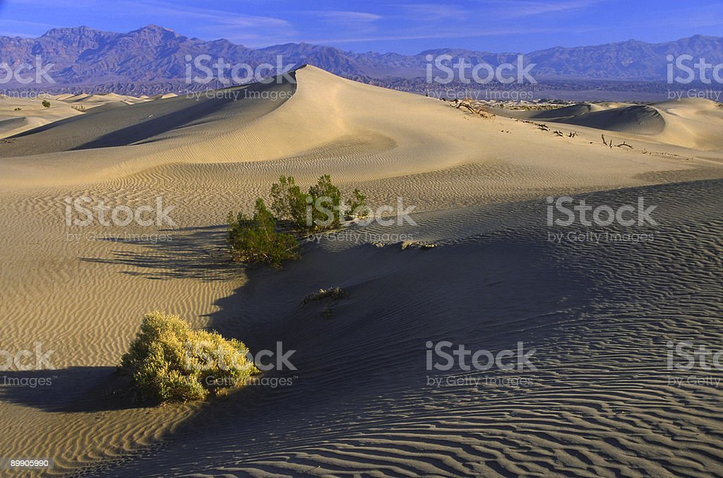 Desert plants on sand dunes in Death Valley royalty-free stock photo