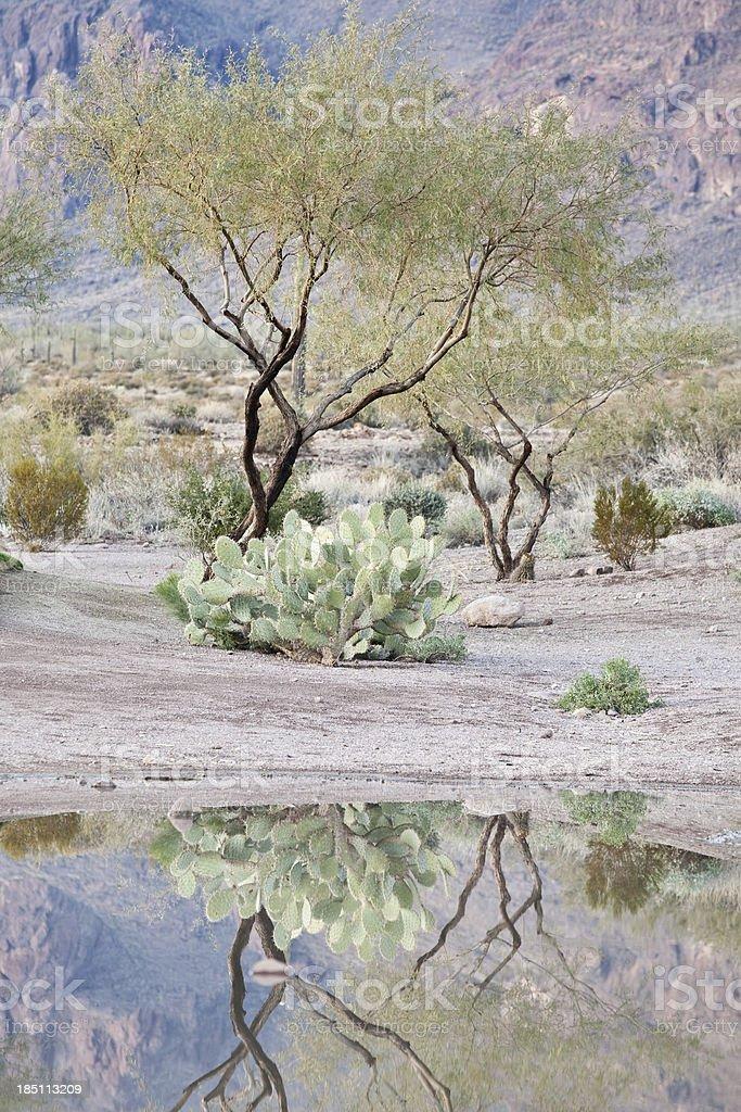 Desert Reflection stock photo