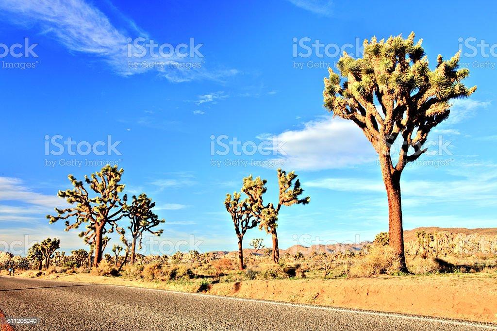 Desert Road in the Joshua Tree National Park, USA stock photo