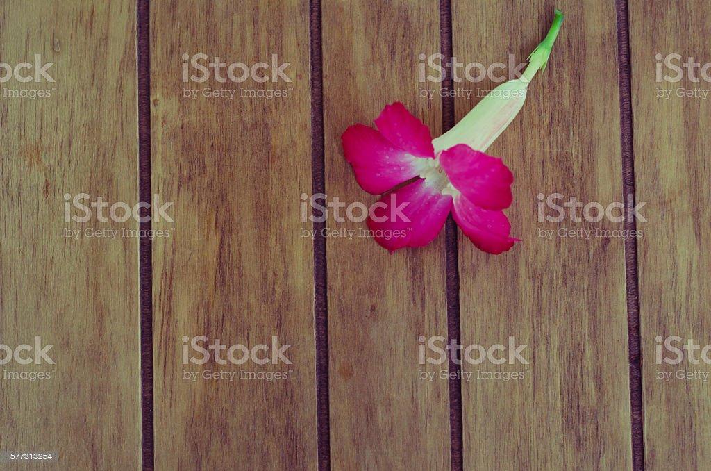 Desert Rose on wood stock photo