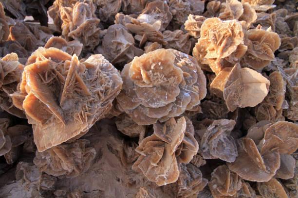 desert rose - rose des sables photos et images de collection