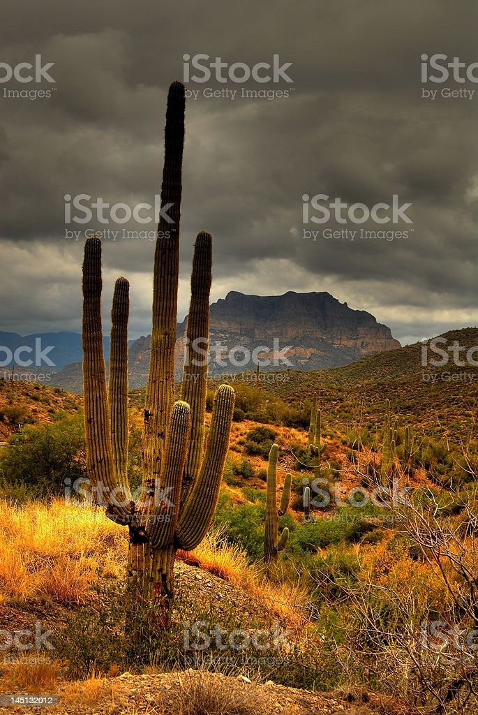 Desert Saguaro 81 royalty-free stock photo
