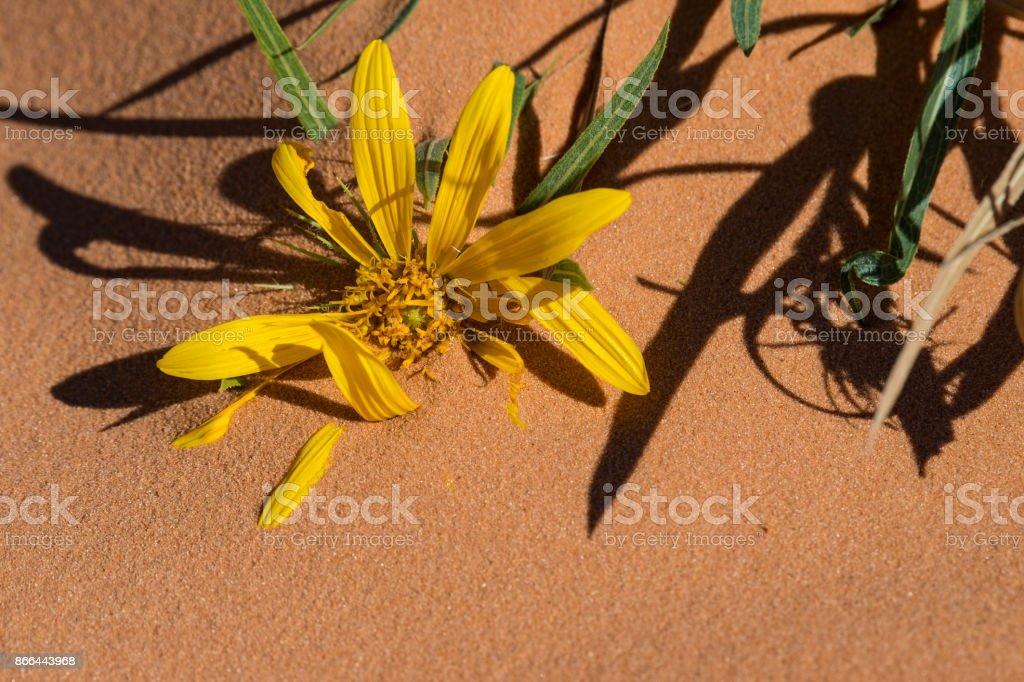 Desert Sand stock photo