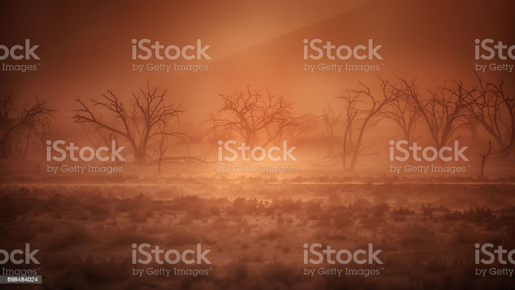 A desert sand storm creates creates golden light and a dusty atmosphere around dead trees in the Namibian desert. stock photo