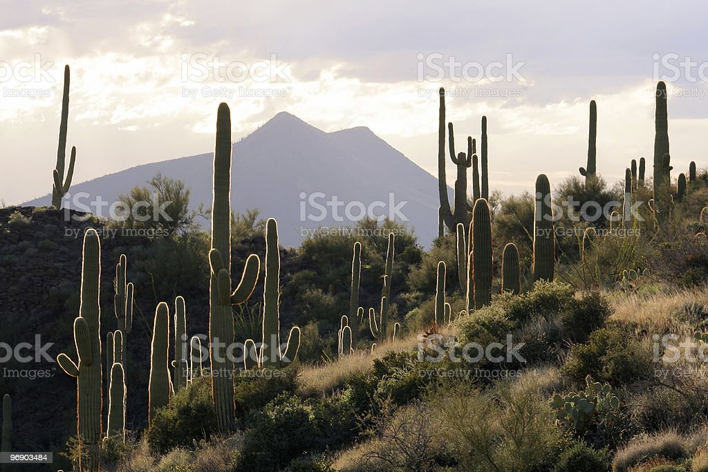 Desert scene with cacti and mountains in background stock photo