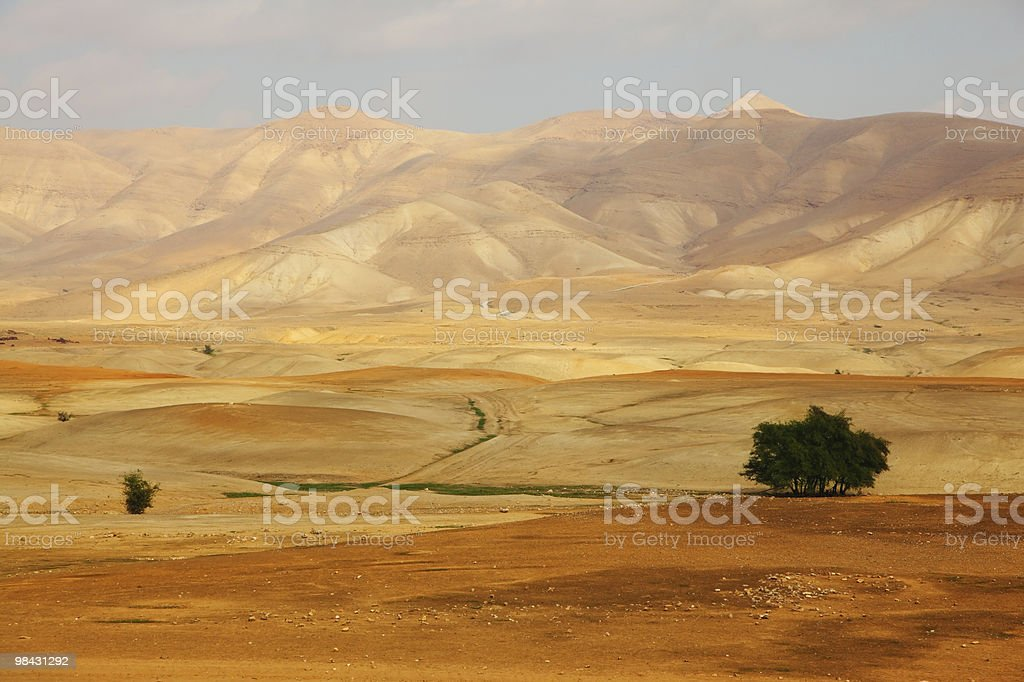 Desert Sinai in a  morning royalty-free stock photo
