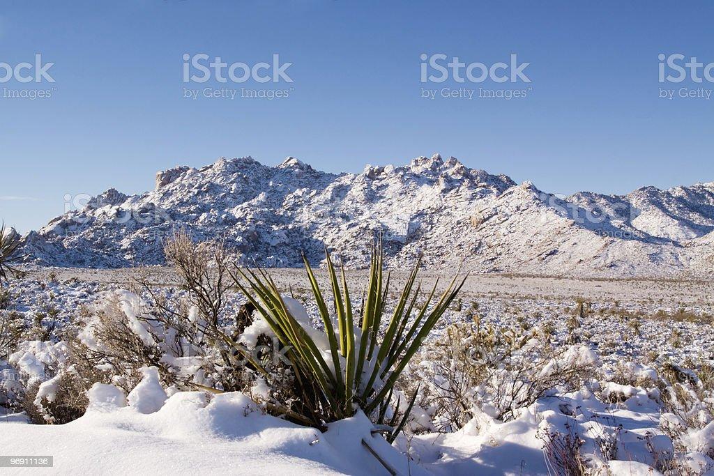 Desert snow royalty-free stock photo