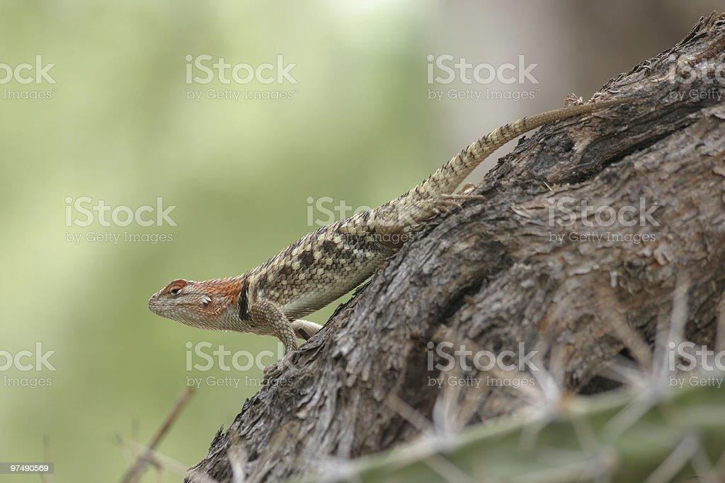 Desert Spines royalty-free stock photo