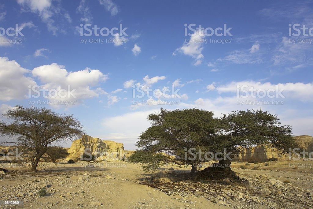 Desert, stones and the trees royalty-free stock photo