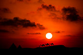 Picaresque view of a desert at a sunset with heard of camels passing by
