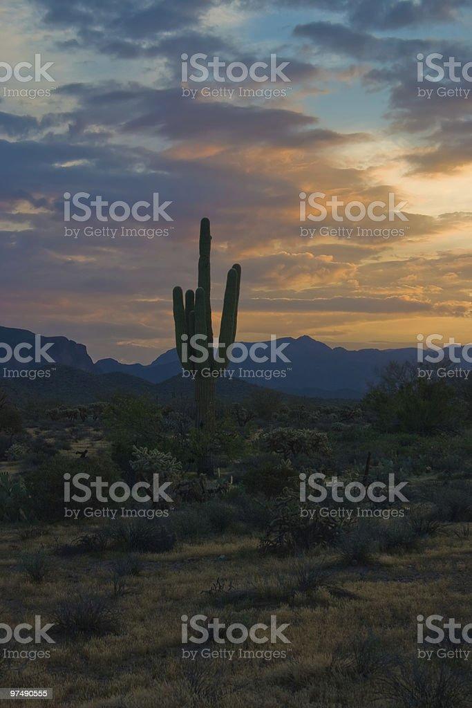 Desert Sunrise with Saguaro Silhouette royalty-free stock photo