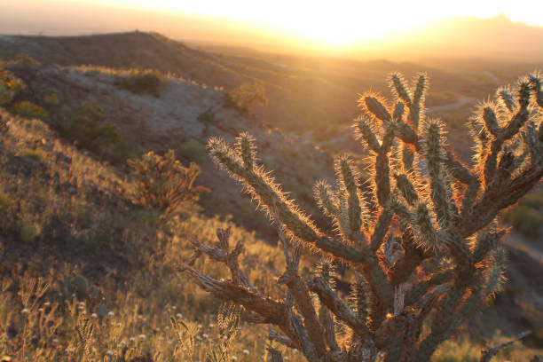 Desert Sunset 2 stock photo