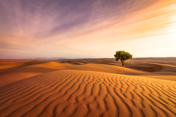 desert sunset - sand dune stock photos and pictures