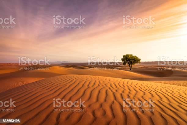 lonely tree in the desert of oman.