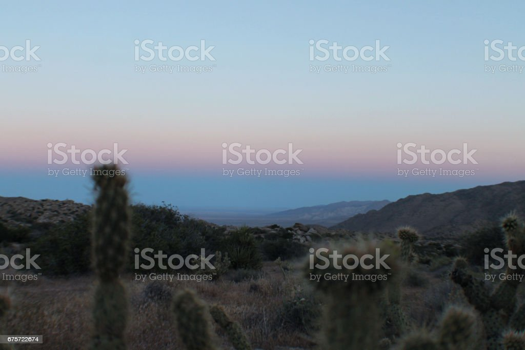 Desert Sunset with Cactus stock photo
