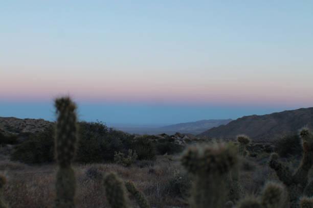 Desert Sunset with Cactus stock photo