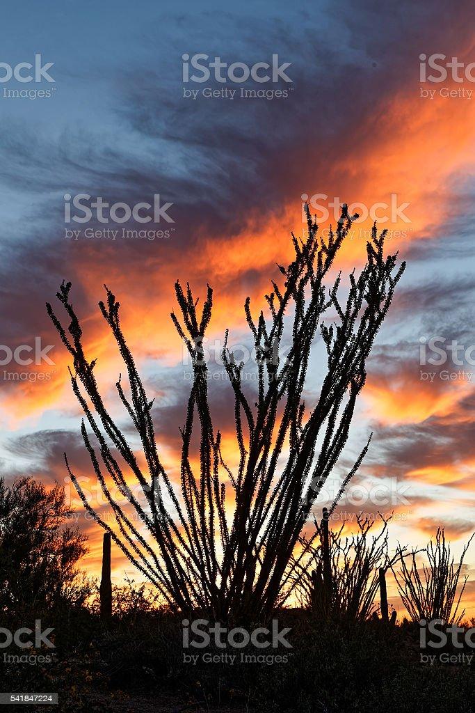 Desert Sunset-Scottsdale Arizona. stock photo