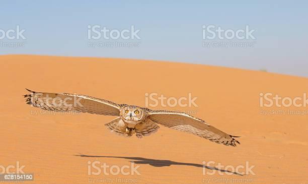 Desert tawny owl in a desert near dubai picture id628154150?b=1&k=6&m=628154150&s=612x612&h=crm9ma riljzdl3ylggctbx7okmkcsgmfnnmiub6nbi=