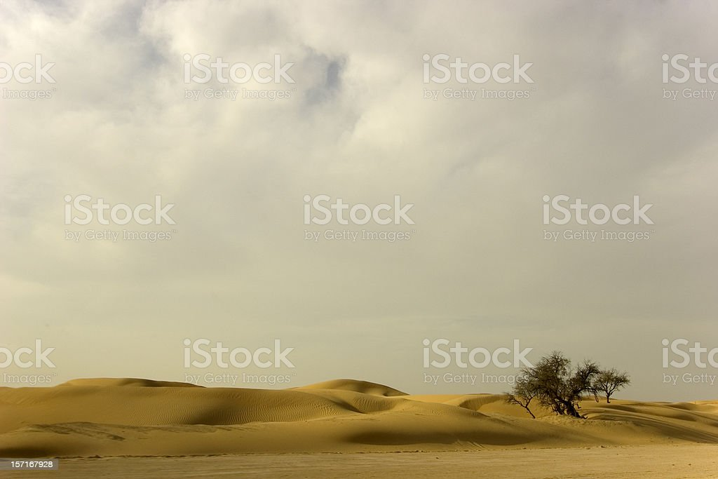 Desert tree and clouds royalty-free stock photo
