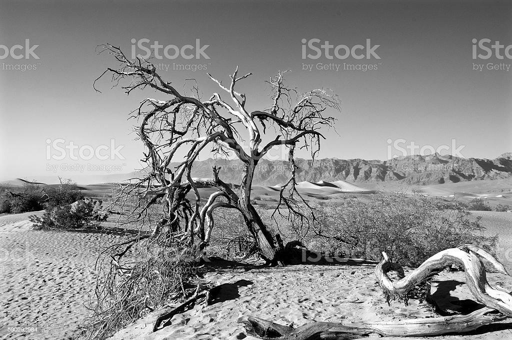 Пустыня дерево Стоковые фото Стоковая фотография