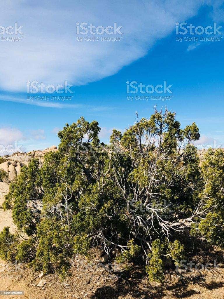 Desert Tree zbiór zdjęć royalty-free