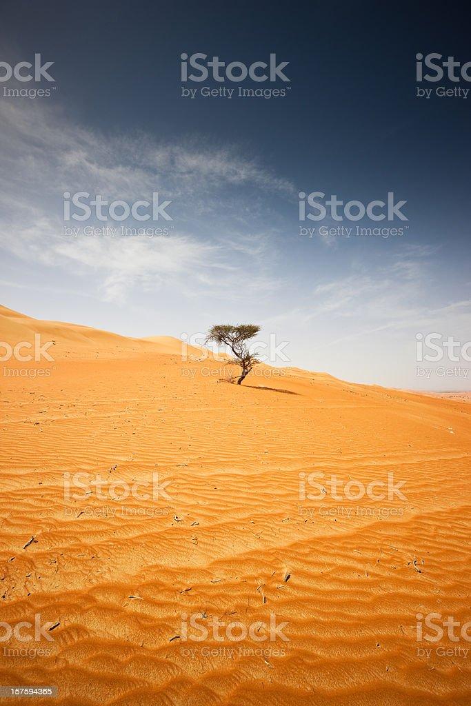 Desert Tree Wahiba Sands Sultanate of Oman royalty-free stock photo