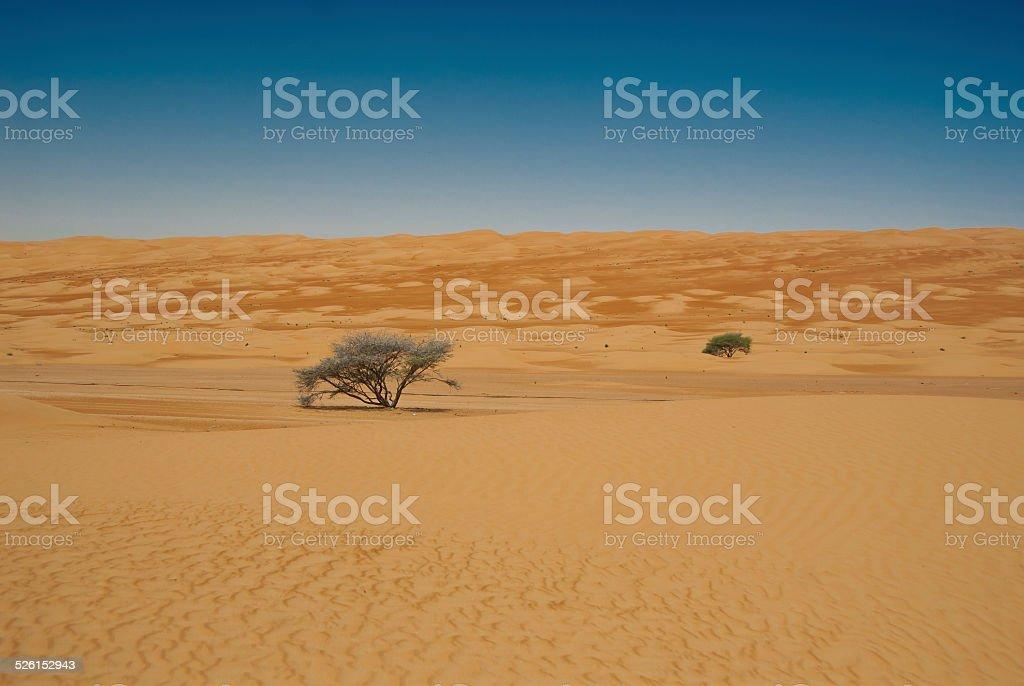 Desert - Trees stock photo