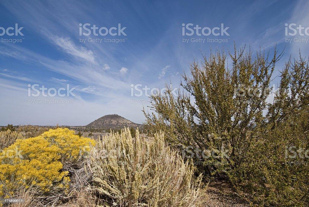 Desert Vegetation Near Schonchin Butte stock photo