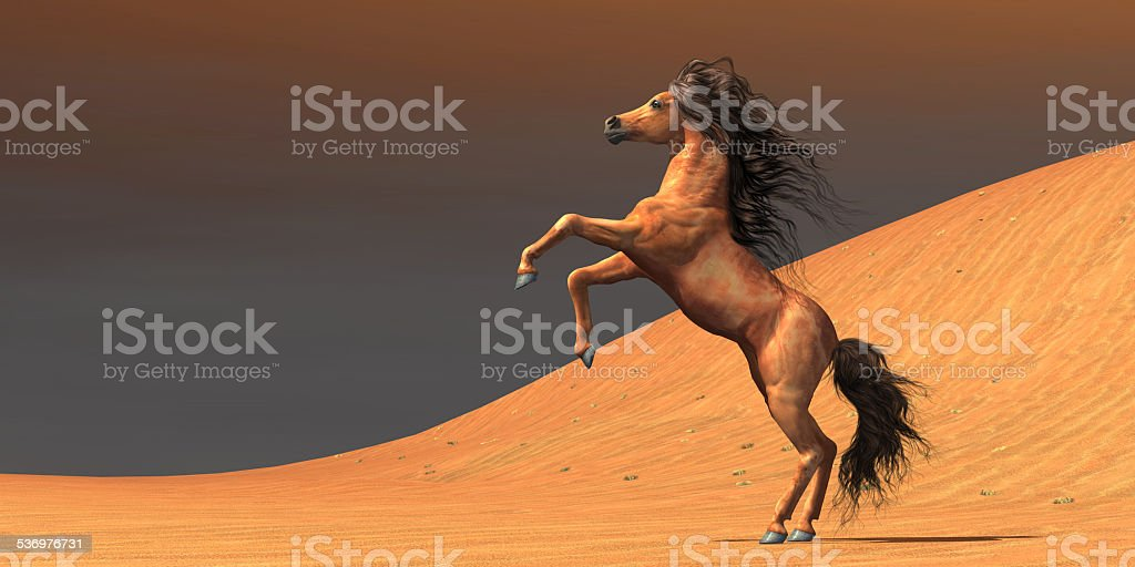 Desert Wild Horse stock photo