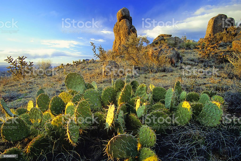 desert with cactus and rock formation landscape sunset stock photo
