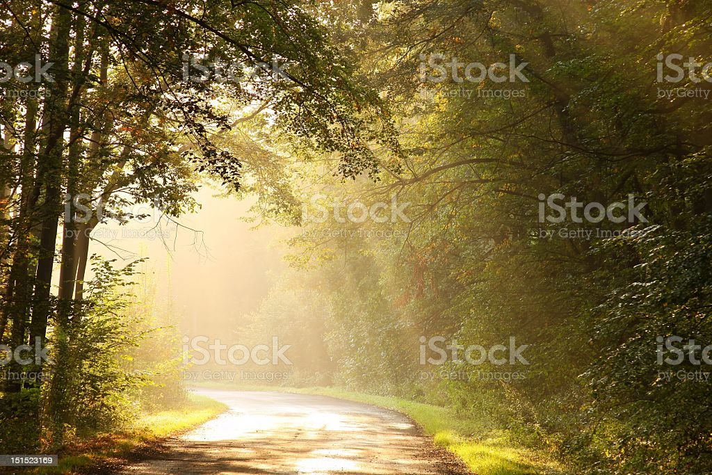 A deserted country road through a misty forest stock photo