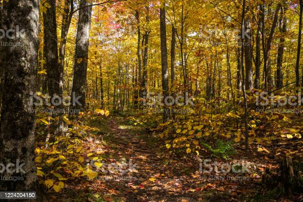 Photo of Deserted forest trail in autumn. Stunning autum colours.