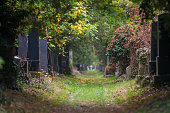 mystic path through the jewish cemetery of the zentralfriedhof graveyard in vienna austria with tombstones and forest that is overgrowing the graves