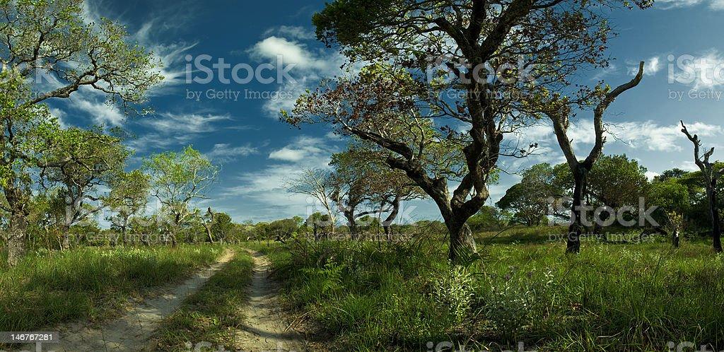 Deserted Road Leading Into Distance in Coastal Savannah Kosi Bay royalty-free stock photo