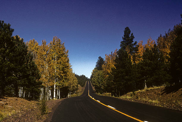 Deserted road Straight road through trees somewhere in Arizona. hearkencreative stock pictures, royalty-free photos & images