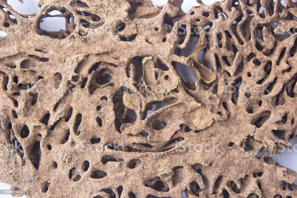 deserted termite nest stock photo