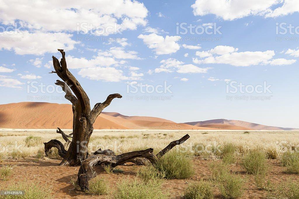 Deserted Tree royalty-free stock photo